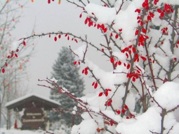 как сделать более ярким ландшафтный дизайн зимой?